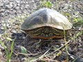 Image for Turtle Crossing - Hill County, TX