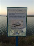 Image for Mission Bay Bird Habitats - San Diego, CA