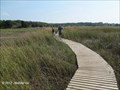 Image for Boardwalks - Wellfleet Bay Massachusetts Audubon Wildlife Sanctuary - Wellfleet, MA