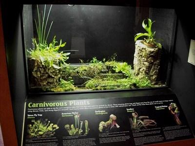 Carnivorous Plant Display Great Lakes Aquarium Duluth
