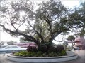 Image for Bicentennial Liberty Oak Tree  -  Fort Lauderdale, FL