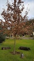 Image for Millennium Tree - Village Green - Carsington, Derbyshire