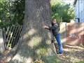 Image for Quercus Robur
