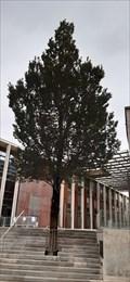 Image for arbre de la Fraternite Hotel de Ville - Niort, France