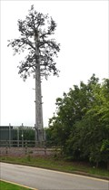 Image for Cell tower disguised as a Pine Tree.