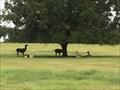 Image for Haggard Farm Llamas - Plano, TX, US