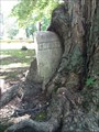 Image for Gravestone-Eating Tree - Erie, PA