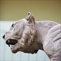 Image for Lewis & Clark High School Tigers - Spokane, WA