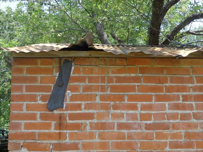No cat here, but we were close to a hundred degrees when I snapped a shot of this tin roof.