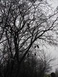 Image for Highland Park Shoe Tree - Highland Park, Illinois