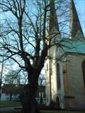 Image for Friedenslinde - Bielefeld, Germany