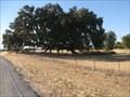 Image for Yahi Yana Native American Trail Tree, Lassen Natl Forest, CA