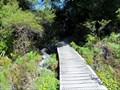 Image for Boardwalk @ Hawkes Lookout  - Takaka Hill, South Island, New Zealand