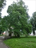 Image for Tree of the republic - Nový Bydžov, Czech Republic