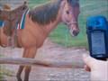 Image for Cowboy - Bandera, TX