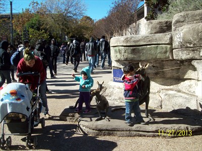 Kids seem to love playing on statues.  These are statues of a kangaroo family.