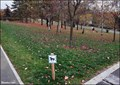 Image for Off-Leash Dog Area in Malešice Park - Prague, CZ