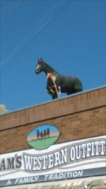 The horse with decor.