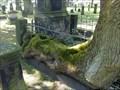 Image for Fence eating tree @ Gartenkirche/Hannover