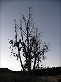 Image for Shoe Tree of Dayville-Mitchell, Oregon