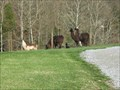Image for Isley Creek Farm - Blountville, TN