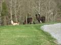Image for Isley Creek Farm - Blountville, TN