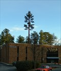Image for Pine Tree Cell Phone Tower, Cary, North Carolina