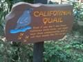 Image for California Quail - Anaheim, CA