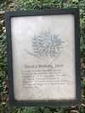 Image for Devil's Walking Stick - Rock Hall, Maryland