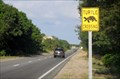 Image for Cape Cod Turtle Crossing - Provincetown, MA