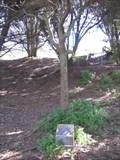 Image for Margaret Randolf Tree - San Francisco, CA