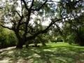 Image for Seiders Oaks - Austin, TX