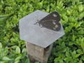 Image for Horizontal (Butterfly) Sundial - Horniman Gardens, London Road, Forest Hill, London, UK
