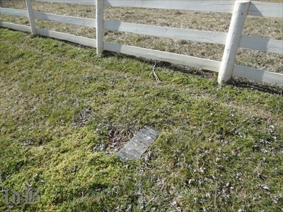 Dovey`s small, unassuming grave marker is near the back fence of the cemetery.