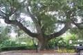 Image for The De Soto Oak - Tampa, FL