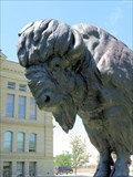 Image for Bison, Wyoming Centennial - Cheyenne, WY