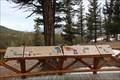 Image for Douglas Fir - Banff, Alberta