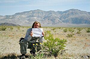 Ashford Mills Wild Flower Field Death Valley California