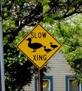 Image for Duck Crossing - Manlius, NY