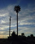 Image for El Paso, TX Palm Tree Tower