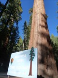 Image for Mariposa Grove - Fish Camp, CA