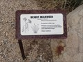 Image for Desert Milkweed, Desert Awareness Park - Cave Creek, Arizona