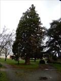 Image for sequoia parc des Jacobins - Fontenay le comte, France