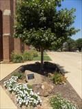 Image for B. Gordon Edwards tree - First Presbyterian Church - Stillwater, OK