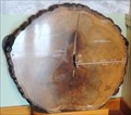 Image for Red Oak with 150 Tree Rings  -  Toronto, Ontario