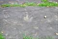 Image for Dinosaur Footprints  -  Springfield, MA