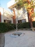 Image for Gene White Tree - Sunnyvale, California