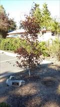 Image for Charlet Gunter Tree - Eagle Point, OR