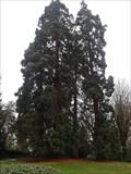 Image for Sequoias , Prebendes garden Tours France.