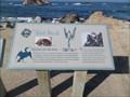 Image for Bird Rock Fauna  -  Pebble Beach, CA